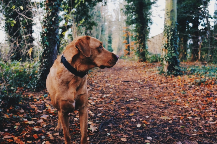 A letter to Toby: what I need to get off my chest about re-homing my dog